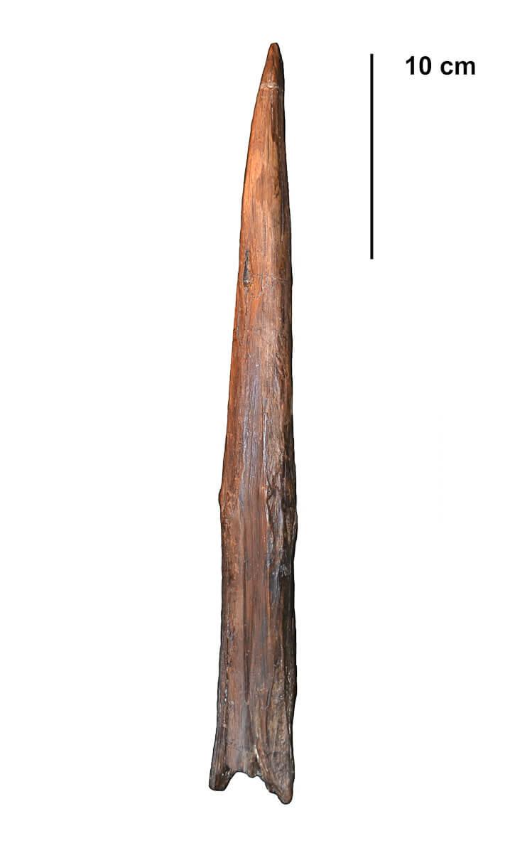 Uma lança neandertal de 400 mil anos.